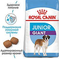 Сухой корм Royal Canin Giant Junior для щенков (8-24 мес.) гигантских размеров
