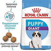 Сухой корм Royal Canin Giant Puppy для щенков (до 8 мес.) гигантских размеров