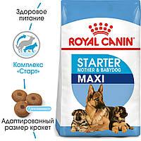 Сухой корм Royal Canin Maxi Starter для щенков крупных размеров до 2 месяцев