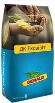 Купить Семена рапса ДК Ексзівіт