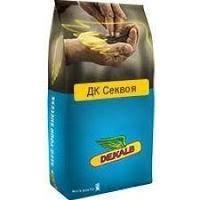 Купить Семена рапса ДК Секвоя