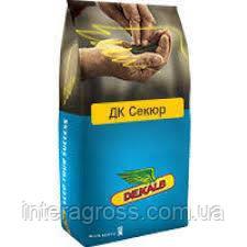 Купить Семена рапса ДК Секюр