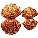 Декоративные ракушки, фото 2