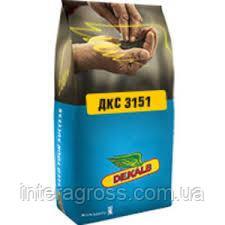 Купити насіння кукурудзи ДКС 3151