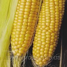 Купити насіння кукурудзи ДКС 3711
