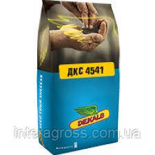 Купити насіння кукурудзи 4541