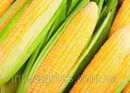 Купить Семена кукурузы Ааспид 230