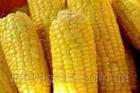 Купить Семена кукурузы Банги Фао 240