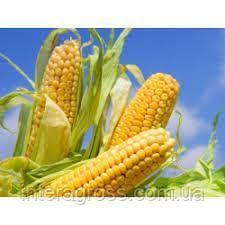 Купить Семена кукурузы ЛГ 2244 ФАО 230