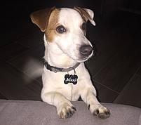 Адресник для собак (Жетон медальйон, заготовки для гравіювання), фото 5