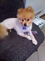 Адресник для собак (Жетон медальйон, заготовки для гравіювання), фото 6