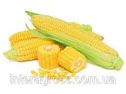 Купити Кукурудза Гармоніум