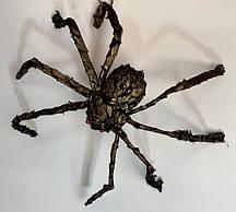 Паук с золотыми чешуйками 30*40 см