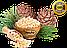 Кедровый орех (Алтай) вес:500 гр, фото 2