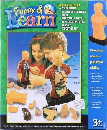 """Научный набор игрушек """"Human Torso"""" Имитация человеческого тела"""