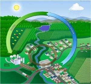 Украинская молочная компания получает электроэнергию от 4000 коров и биогазового двигателя