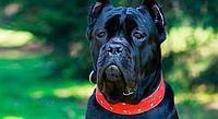 Йозера супер - премиум корм для собак