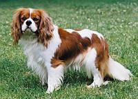 Йозера премиум корм для собак