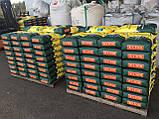 Высокоурожайный подсолнечник Жалон Гранд под Гранстар 50 грамм. Гибрид держит семь рас заразихи A-G. Стандарт, фото 3