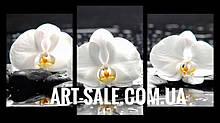 Модульная картина Орхидеи белые