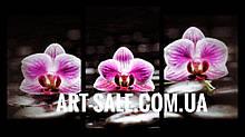 Модульна картина Орхідеї