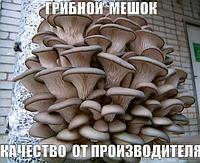 Грибной мешок, Грядка, грибной блок — ВЕШАНКА,ГЛЫВА(ВЫРАЩИВАЕМ  ДОМА)