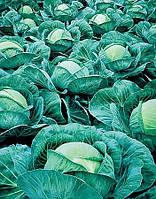 Семена Капусты Атриа F1 (Atria F1) 2500 семян Seminis