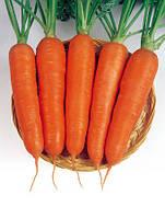 Семена моркови Виктория F1 (Victoria F1) 0,5 кг Seminis (Голландия)