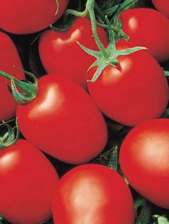 Семена Томата Яки F1 (Yaqui F1) 1000 семян Seminis