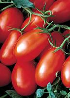 Семена Томата Хайпил 108 F1 (Hypeel 108 F1) 1000 семян Seminis