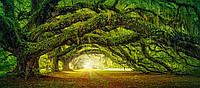 Пазл Сastorland на 600 элементов Дорога в лесу