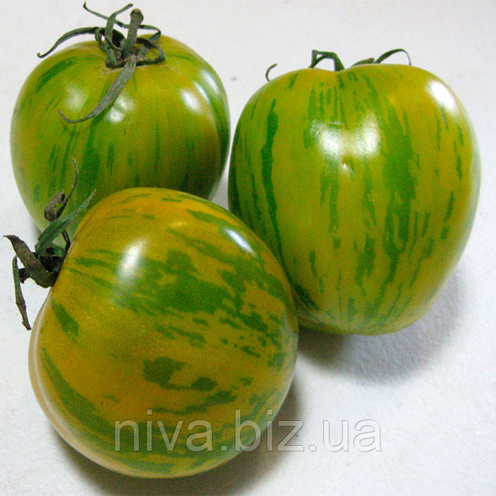 Зеленая Зебра семена томата индет. зеленого Semo 30 семян