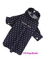 Рубашка для собак фиолетовая Philipp Plein