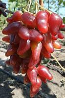 Саженцы винограда Оскар
