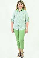 Блуза женская из хлопка стрейчевая , бл 056-1 ,48-56