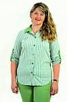 Блуза Бл 056-1 женская из хлопка стрейчевая ,48-54, фото 3