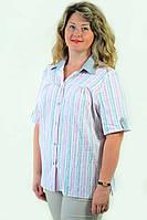 Блуза женская из хлопка стрейчевая , бл 056,48-56
