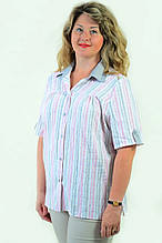 Блуза  Бл 056-1женская из хлопка - стрейч ,размеры 48-56