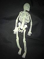 Скелет светится в темноте 20 см