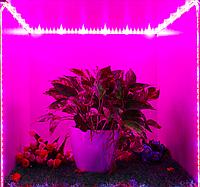 Фитолента для растений упак/5м IP20, 12В 4:1 красно-синий