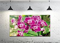 Картина на холсте ProfART S50100-c1364 100 x 50 см Цветы (hub_LyWe74435)