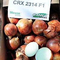 Лук СОНЯ F1 ( CRX 2314) | SONIA  250000  Cora seeds