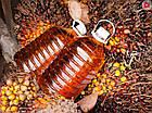 Пальмоядровое масло, фото 3