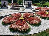 Бордюрна стрічка садова 30 см x 25 м пластик, фото 9