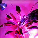 Фитолампы для растений 10W E27, фото 2
