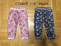 Велюровые утепленные штаны для девочек оптом, F&D, 1-5 лет,  № CY9605, фото 1