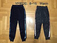 Велюровые утепленные штаны для девочек оптом, F&D, 8-16 лет,  № YF-8520, фото 1