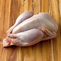 Мясо фазана, цесарки, курицы