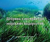 Чим зумовлений попит добрив на основі морських водоростей