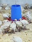 Бункерная кормушка для индюков, гусей, уток Manola-Т, фото 2